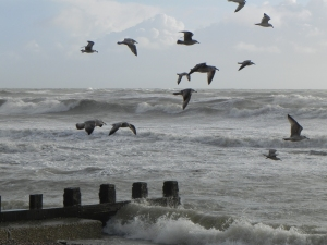 Seagulls flying above the sea at Hastings